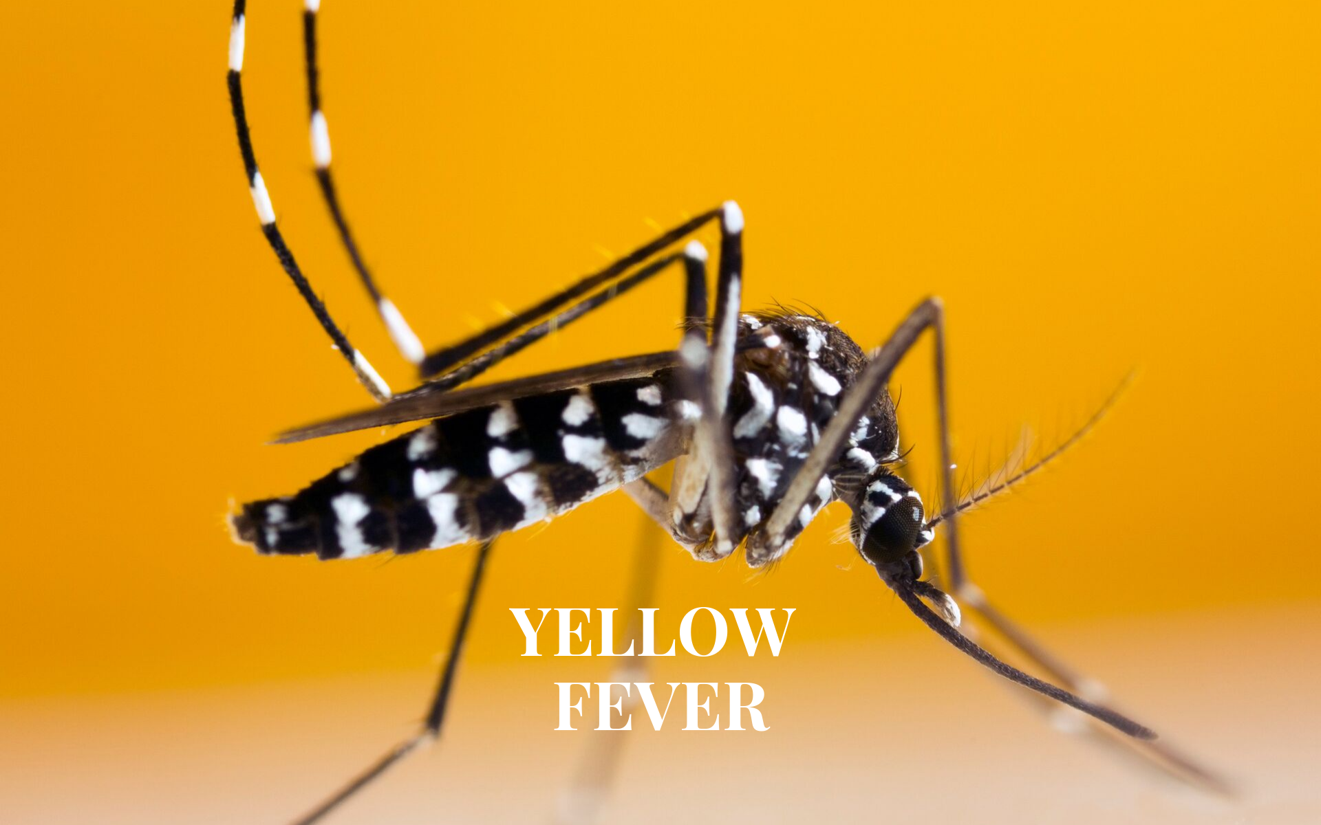 Yellow Fever Vaccination in Teddington